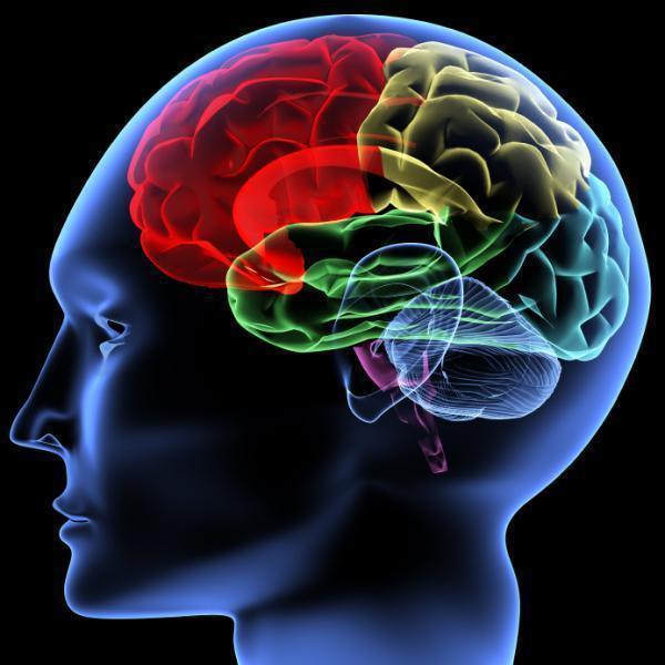 diaforetiko.gr : 080605163804 large Δείτε:Tα 8 είδη νοημοσύνης του ανθρώπου.