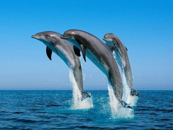 ιστοσελίδα γνωριμιών με Dolphin Σλοβενία χρονολογικά