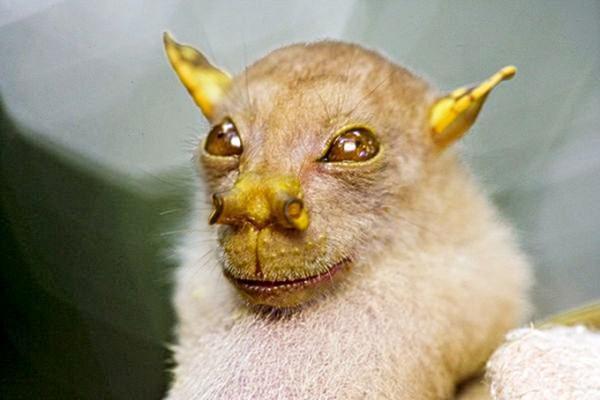 diaforetiko.gr : 32 600x400 Δείτε 10 καινούργια παράξενα ζώα που ανακαλύφθηκαν από το 2010 έως σήμερα!