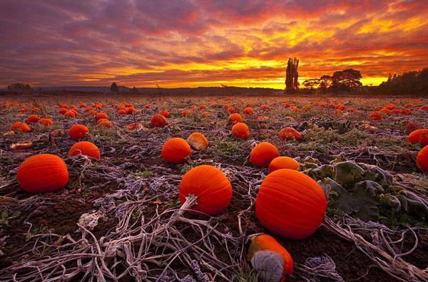 diaforetiko.gr : automn12 Η δύναμη του πορτοκαλί χρώματος στη φύση!