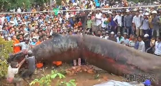 diaforetiko.gr : diafortiko.gr monster ΑΠΙΘΑΝΟ: Ψάρι τέρας ξεβράστηκε στο Βιετνάμ! (βίντεο)