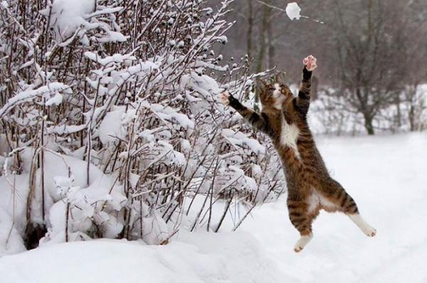 4afc22497246 Προστατέψτε το κατοικίδιο σας από τον κρύο χειμώνα – διαφορετικό