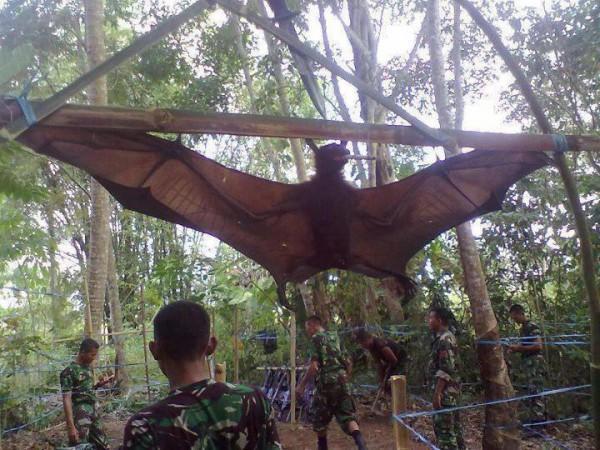 diaforetiko.gr : 25 600x450 Δείτε την μεγαλύτερη νυχτερίδα στον κόσμο!!!