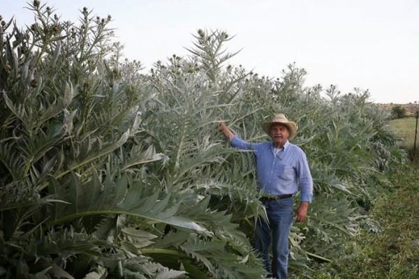 diaforetiko.gr : zarganis2 600x400 Πέτρος Ζαργάνης:  Ένας πανέξυπνος αγρότης της Εύβοιας που με πολυκαλλιέργειες έλυσε το οικονομικό του πρόβλημα
