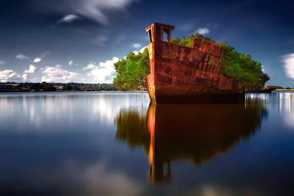 diaforetiko.gr : Floating Forest Το πλωτό δάσος του Σίδνεϊ  Μοιάζει εξωπραγματικό