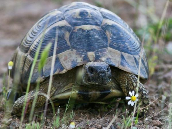 Αποτέλεσμα εικόνας για χελωνα