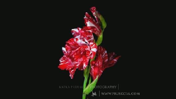 Παρακολουθήστε λουλούδια να ανθίζουν σε ένα καθηλωτικό βίντεο 2.5 λεπτών!