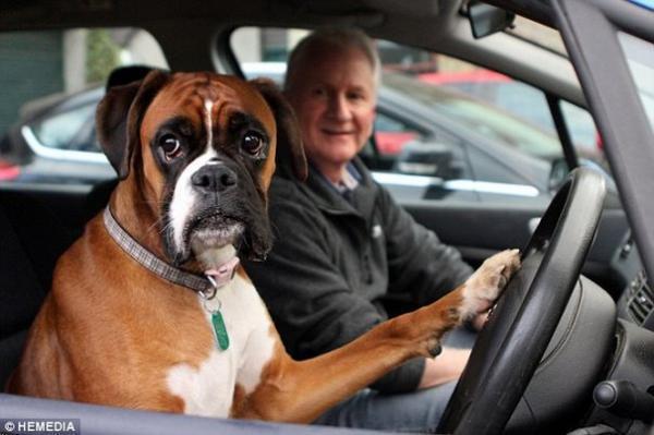 diaforetiko.gr : skylos kornarei 1 600x399 Ο ιδιοκτήτης ενός σκύλου τον ξέχασε στο αυτοκίνητο. Δείτε τι αποφάσισε να κάνει όταν το αφεντικό του καθυστέρησε !!!