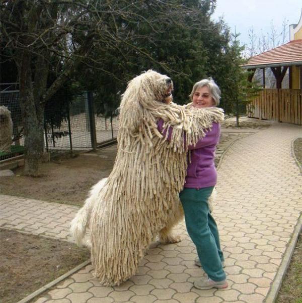 diaforetiko.gr : 1110 600x603 26 αξιολάτρευτα σκυλιά στην αγκαλιά του αφεντικού τους! Τρυφερές στιγμές…