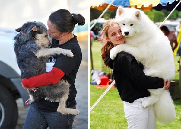 diaforetiko.gr : 1212 600x427 26 αξιολάτρευτα σκυλιά στην αγκαλιά του αφεντικού τους! Τρυφερές στιγμές…