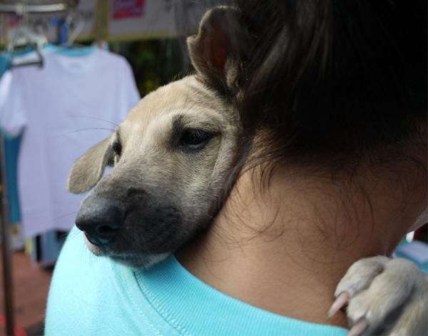 diaforetiko.gr : 515 600x471 26 αξιολάτρευτα σκυλιά στην αγκαλιά του αφεντικού τους! Τρυφερές στιγμές…