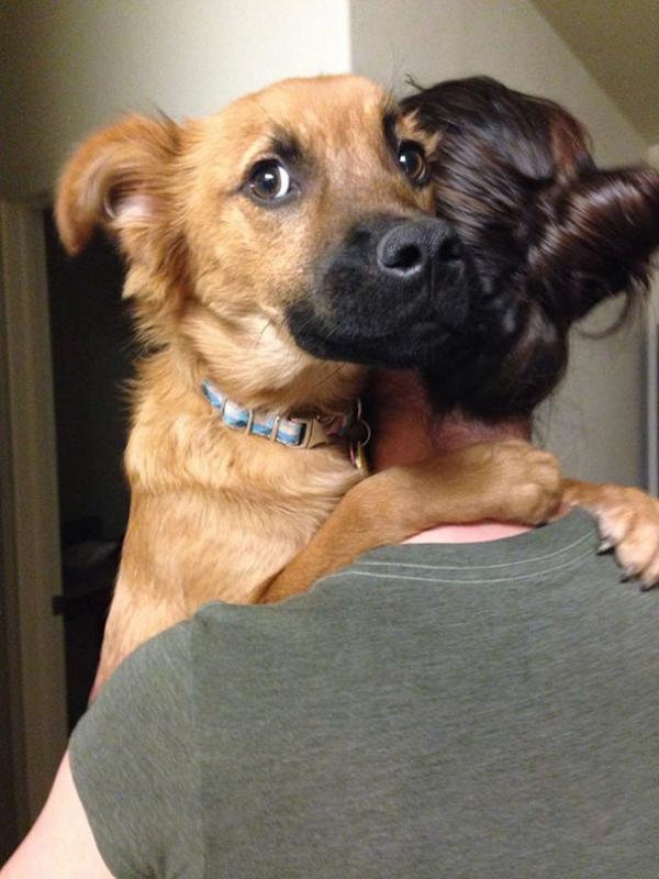 diaforetiko.gr : cute dogs hugging humans 109 600x800 26 αξιολάτρευτα σκυλιά στην αγκαλιά του αφεντικού τους! Τρυφερές στιγμές…