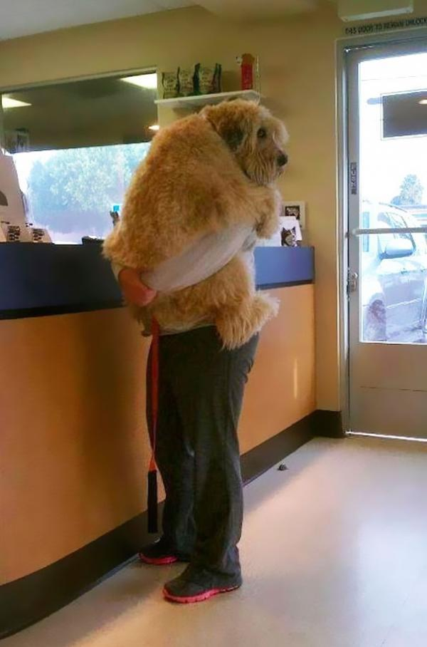 diaforetiko.gr : cute dogs hugging humans 11 600x908 26 αξιολάτρευτα σκυλιά στην αγκαλιά του αφεντικού τους! Τρυφερές στιγμές…