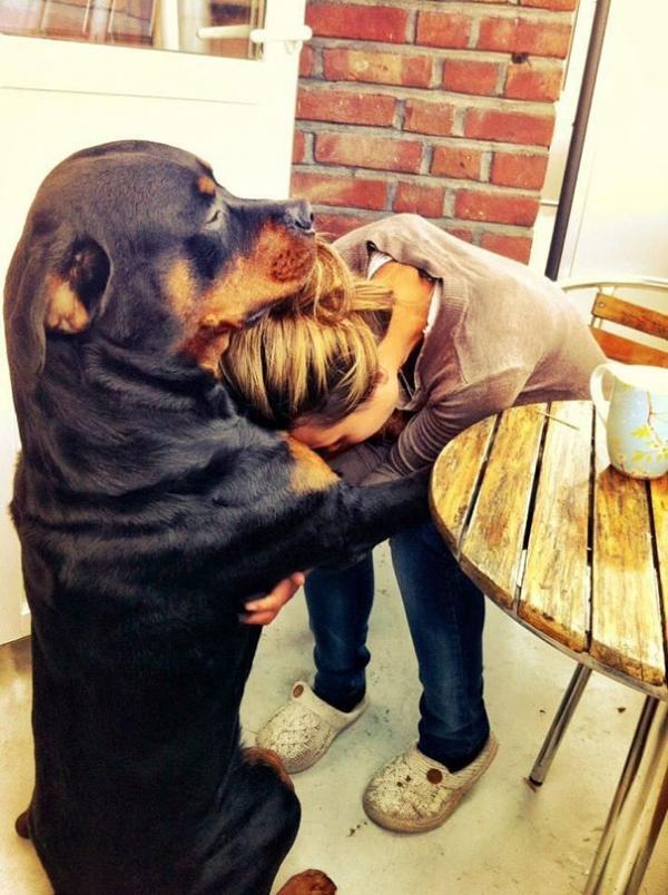 diaforetiko.gr : cute dogs hugging humans 4 600x804 26 αξιολάτρευτα σκυλιά στην αγκαλιά του αφεντικού τους! Τρυφερές στιγμές…