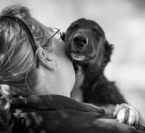 diaforetiko.gr : cute dogs hugging humans 842 600x552 26 αξιολάτρευτα σκυλιά στην αγκαλιά του αφεντικού τους! Τρυφερές στιγμές…