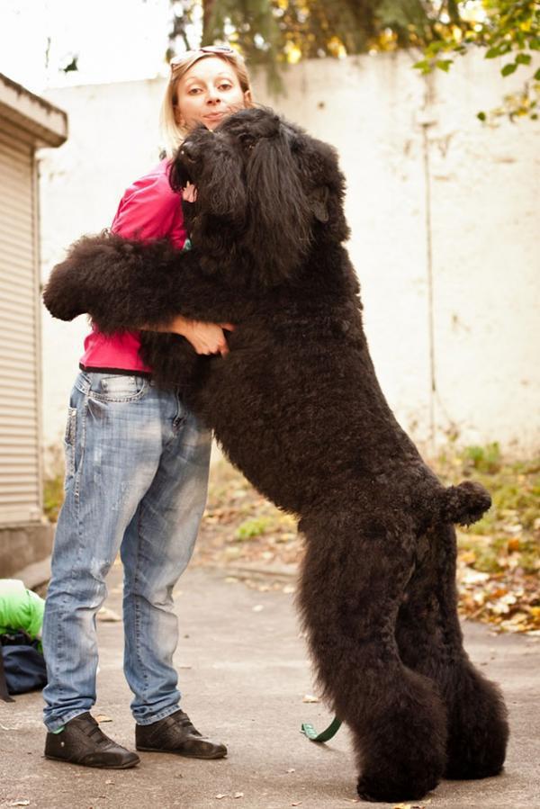 diaforetiko.gr : cute dogs hugging humans 851 600x899 26 αξιολάτρευτα σκυλιά στην αγκαλιά του αφεντικού τους! Τρυφερές στιγμές…