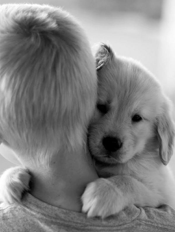 diaforetiko.gr : cute dogs hugging humans 99 600x797 26 αξιολάτρευτα σκυλιά στην αγκαλιά του αφεντικού τους! Τρυφερές στιγμές…