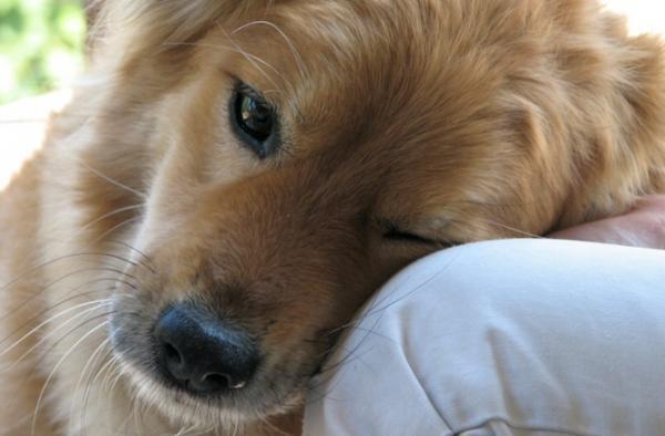 diaforetiko.gr : dnews files 2014 02 dog with head in humans lap 670x440 jpg 600x394 20 αλήθειες που δεν πρέπει να ξεχνάμε όσοι αγαπάμε τα σκυλιά! Μαθήματα ζωής…