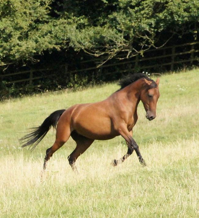 diaforetiko.gr : desktop 1409865135 Αυτό το άλογο βρέθηκε στην κατάσταση που βλέπετε δίπλα στο δρόμο. Περιμένετε όμως μέχρι να δείτε τι συνέβη…