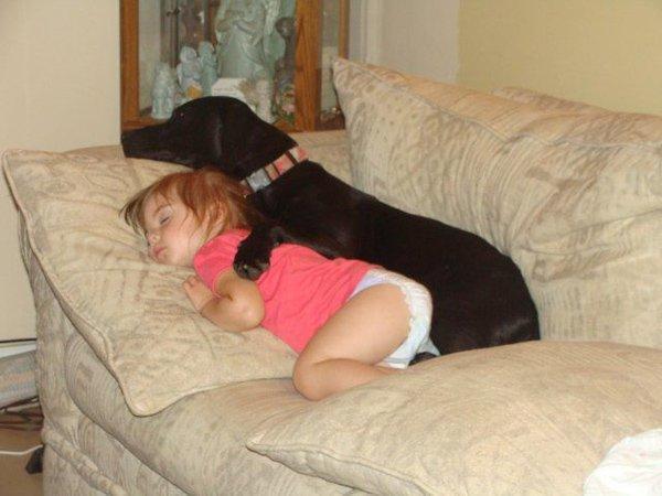 ύπνος Σκύλος σκυλάκια
