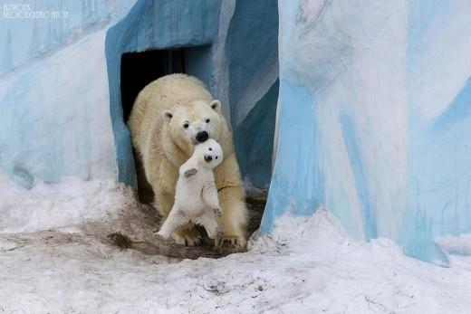 diaforetiko.gr : 693440 1 17 25 τρυφερές στιγμές γονιών με τα μικρά τους στο ζωικό βασίλειο! Γιατί οι γονείς μοιάζουν, σε όποιο είδος κι αν ανήκουν…