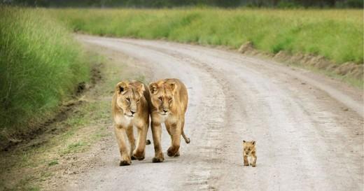 diaforetiko.gr : 693442 3 9 25 τρυφερές στιγμές γονιών με τα μικρά τους στο ζωικό βασίλειο! Γιατί οι γονείς μοιάζουν, σε όποιο είδος κι αν ανήκουν…