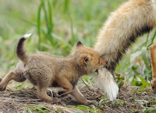 diaforetiko.gr : 693444 5 8 25 τρυφερές στιγμές γονιών με τα μικρά τους στο ζωικό βασίλειο! Γιατί οι γονείς μοιάζουν, σε όποιο είδος κι αν ανήκουν…