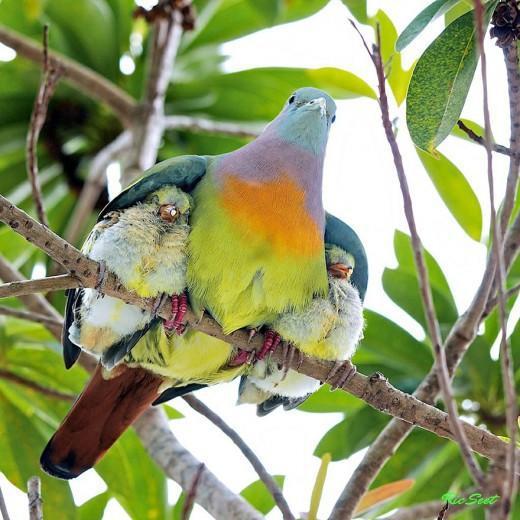 diaforetiko.gr : 693445 6 8 25 τρυφερές στιγμές γονιών με τα μικρά τους στο ζωικό βασίλειο! Γιατί οι γονείς μοιάζουν, σε όποιο είδος κι αν ανήκουν…