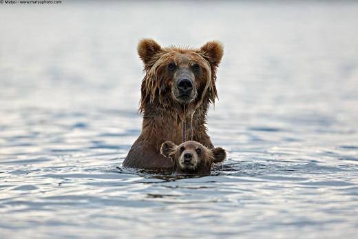 diaforetiko.gr : 693447 8 5 25 τρυφερές στιγμές γονιών με τα μικρά τους στο ζωικό βασίλειο! Γιατί οι γονείς μοιάζουν, σε όποιο είδος κι αν ανήκουν…
