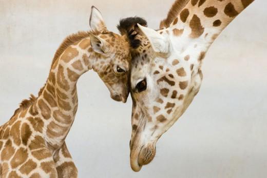 diaforetiko.gr : 693448 9 7 25 τρυφερές στιγμές γονιών με τα μικρά τους στο ζωικό βασίλειο! Γιατί οι γονείς μοιάζουν, σε όποιο είδος κι αν ανήκουν…