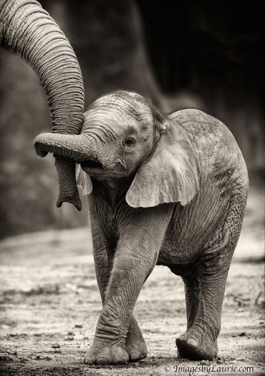 diaforetiko.gr : 693449 10 7 25 τρυφερές στιγμές γονιών με τα μικρά τους στο ζωικό βασίλειο! Γιατί οι γονείς μοιάζουν, σε όποιο είδος κι αν ανήκουν…