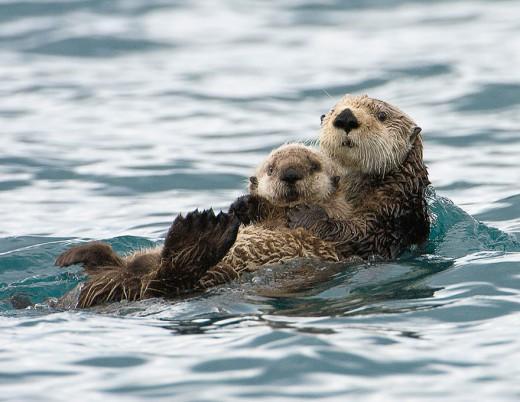 diaforetiko.gr : 693452 12 7 25 τρυφερές στιγμές γονιών με τα μικρά τους στο ζωικό βασίλειο! Γιατί οι γονείς μοιάζουν, σε όποιο είδος κι αν ανήκουν…