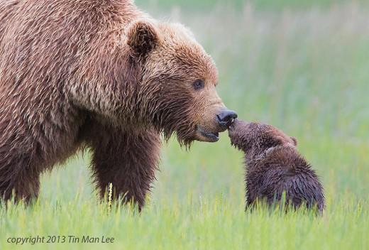 diaforetiko.gr : 693454 14 5 25 τρυφερές στιγμές γονιών με τα μικρά τους στο ζωικό βασίλειο! Γιατί οι γονείς μοιάζουν, σε όποιο είδος κι αν ανήκουν…