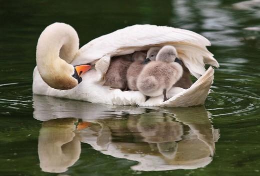 diaforetiko.gr : 693455 15 4 25 τρυφερές στιγμές γονιών με τα μικρά τους στο ζωικό βασίλειο! Γιατί οι γονείς μοιάζουν, σε όποιο είδος κι αν ανήκουν…