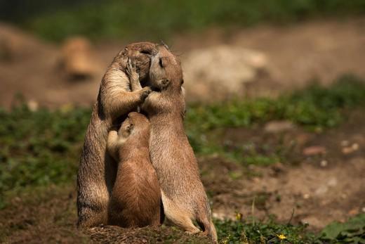 diaforetiko.gr : 693456 16 3 25 τρυφερές στιγμές γονιών με τα μικρά τους στο ζωικό βασίλειο! Γιατί οι γονείς μοιάζουν, σε όποιο είδος κι αν ανήκουν…