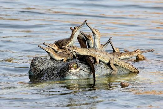 diaforetiko.gr : 693457 17 3 25 τρυφερές στιγμές γονιών με τα μικρά τους στο ζωικό βασίλειο! Γιατί οι γονείς μοιάζουν, σε όποιο είδος κι αν ανήκουν…