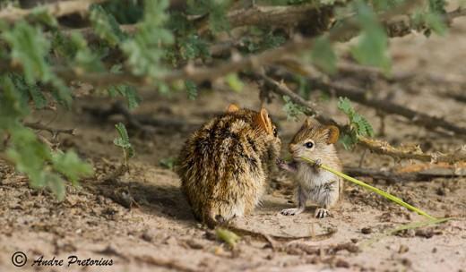 diaforetiko.gr : 693460 20 3 25 τρυφερές στιγμές γονιών με τα μικρά τους στο ζωικό βασίλειο! Γιατί οι γονείς μοιάζουν, σε όποιο είδος κι αν ανήκουν…