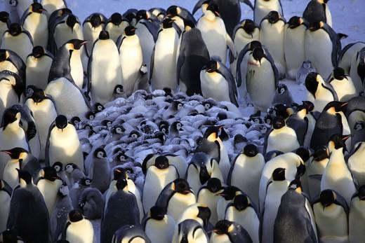 diaforetiko.gr : 693461 21 3 25 τρυφερές στιγμές γονιών με τα μικρά τους στο ζωικό βασίλειο! Γιατί οι γονείς μοιάζουν, σε όποιο είδος κι αν ανήκουν…