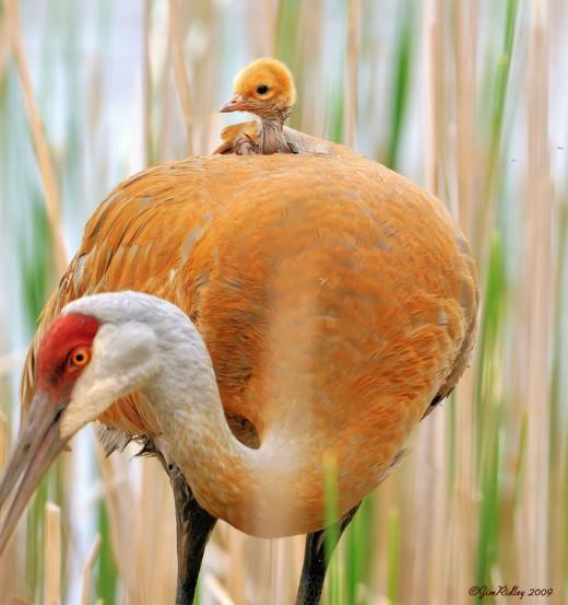 diaforetiko.gr : 693463 23 2 25 τρυφερές στιγμές γονιών με τα μικρά τους στο ζωικό βασίλειο! Γιατί οι γονείς μοιάζουν, σε όποιο είδος κι αν ανήκουν…