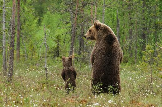 diaforetiko.gr : 693465 25 2 25 τρυφερές στιγμές γονιών με τα μικρά τους στο ζωικό βασίλειο! Γιατί οι γονείς μοιάζουν, σε όποιο είδος κι αν ανήκουν…