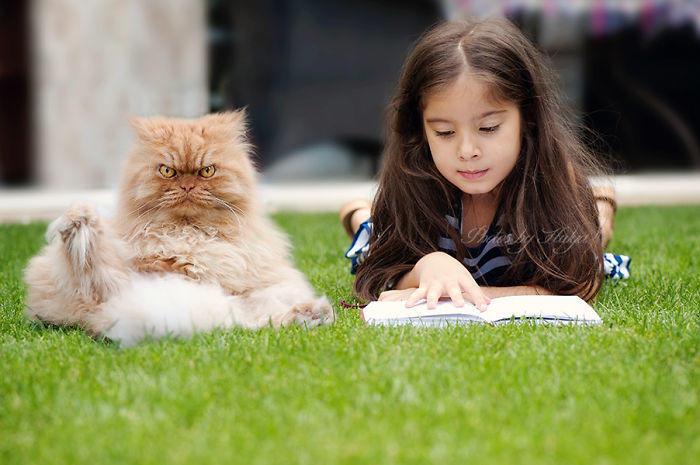 diaforetiko.gr : Meet Garfi The Cat Who Looks Like Hes Planning To Kill You  700 ΠΟΛΛΑ ΝΕΥΡΑ !!! Αυτός είναι ο Garfi, ο πιο «στραβωμένος» γάτος του κόσμου !!!!