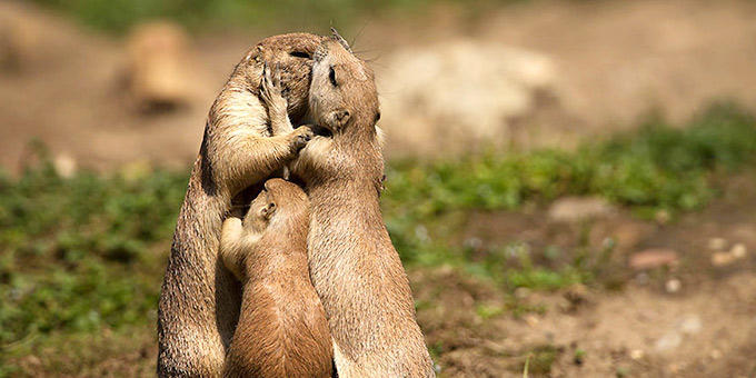 diaforetiko.gr : filiountai 680 366994 2NC522 4 Οκτωβρίου: Παγκόσμια Ημέρα των Ζώων!   24 τρυφερές φωτογραφίες με ζωάκια που φιλιούνται !!