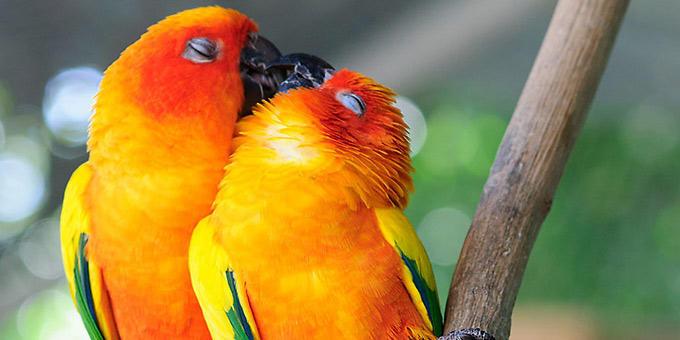 diaforetiko.gr : filiountai GAL 10 366981 619239 4 Οκτωβρίου: Παγκόσμια Ημέρα των Ζώων!   24 τρυφερές φωτογραφίες με ζωάκια που φιλιούνται !!