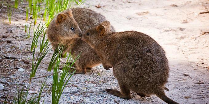 diaforetiko.gr : filiountai GAL 16 366975 9Y953N 4 Οκτωβρίου: Παγκόσμια Ημέρα των Ζώων!   24 τρυφερές φωτογραφίες με ζωάκια που φιλιούνται !!
