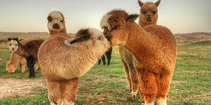 diaforetiko.gr : filiountai GAL 17 366974 A03602 4 Οκτωβρίου: Παγκόσμια Ημέρα των Ζώων!   24 τρυφερές φωτογραφίες με ζωάκια που φιλιούνται !!
