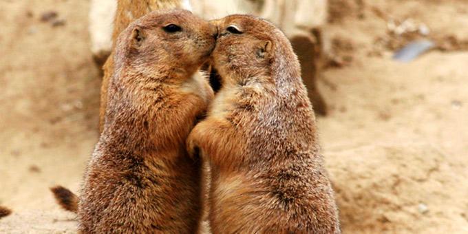 diaforetiko.gr : filiountai GAL 18 366973 141292 4 Οκτωβρίου: Παγκόσμια Ημέρα των Ζώων!   24 τρυφερές φωτογραφίες με ζωάκια που φιλιούνται !!