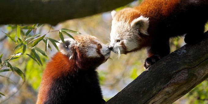diaforetiko.gr : filiountai GAL 19 366972 5VU5C2 4 Οκτωβρίου: Παγκόσμια Ημέρα των Ζώων!   24 τρυφερές φωτογραφίες με ζωάκια που φιλιούνται !!