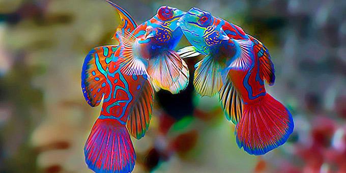 diaforetiko.gr : filiountai GAL 1 366990 3TL4NO 4 Οκτωβρίου: Παγκόσμια Ημέρα των Ζώων!   24 τρυφερές φωτογραφίες με ζωάκια που φιλιούνται !!