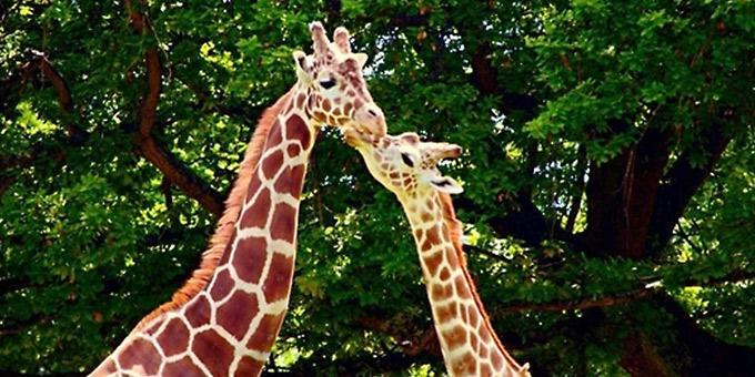 diaforetiko.gr : filiountai GAL 20 366971 160231 4 Οκτωβρίου: Παγκόσμια Ημέρα των Ζώων!   24 τρυφερές φωτογραφίες με ζωάκια που φιλιούνται !!
