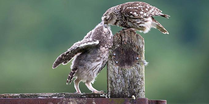 diaforetiko.gr : filiountai GAL 2 366989 94Y5VA 4 Οκτωβρίου: Παγκόσμια Ημέρα των Ζώων!   24 τρυφερές φωτογραφίες με ζωάκια που φιλιούνται !!